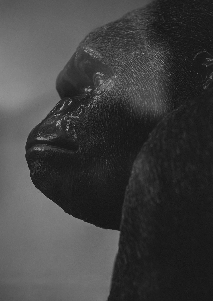 Print - Gorilla Jim